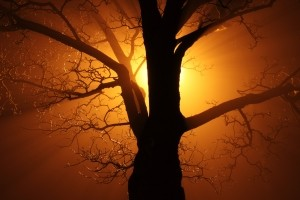 abstract-tree-at-sunset